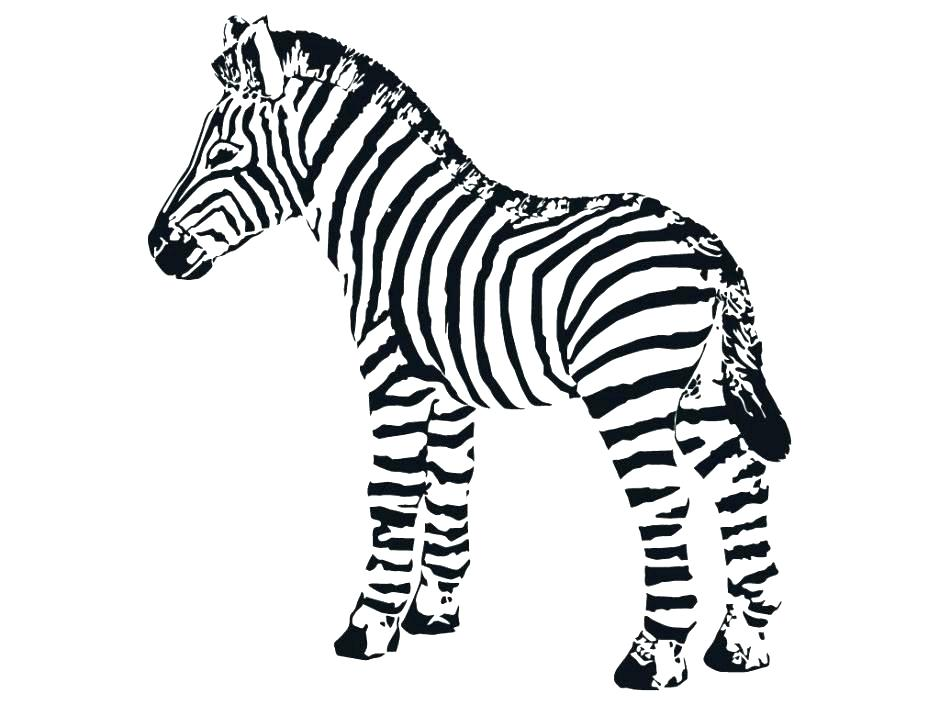 940x705 Zebra Coloring Pages Baby Zebra Coloring Pages Baby Zebra Coloring