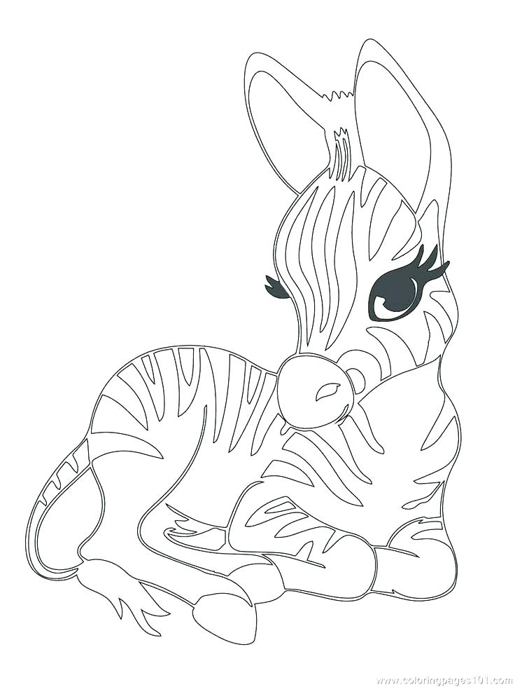 736x980 Zebra Coloring Pages To Print Cute Zebra Coloring Pictures Luxury