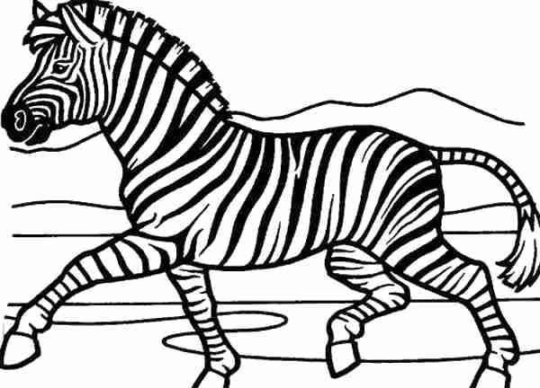600x432 Zebra Coloring Picture Elegant Zebra Coloring Pages
