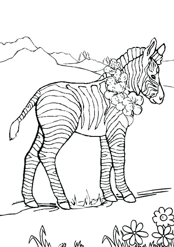 600x850 Coloring Pages Zebra