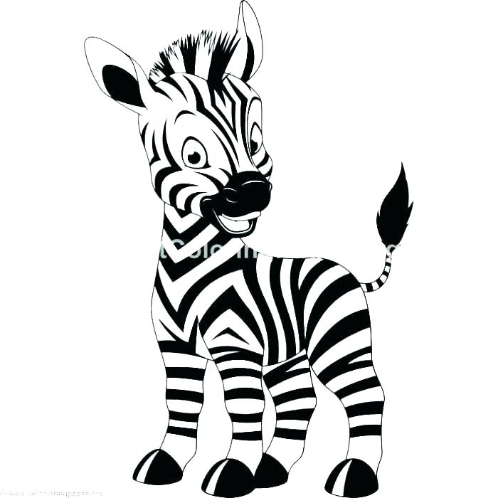 700x700 Zebra Coloring Pages