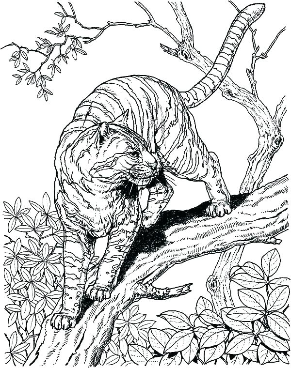600x760 Coloring Pages Hard