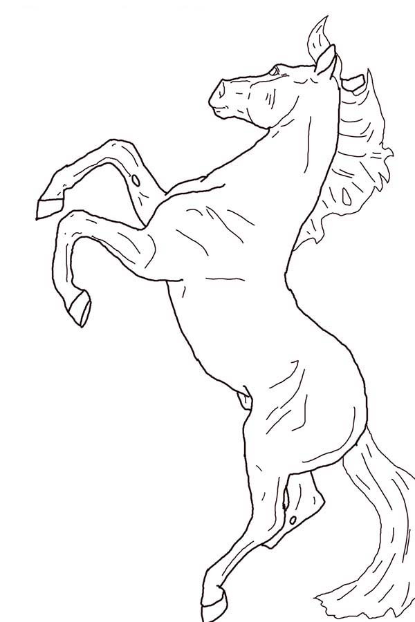 600x900 Horse Rearing In Horses Coloring Page