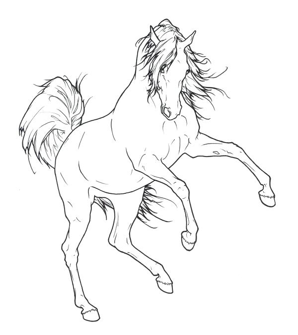 600x674 Arabian Horse Coloring Pages