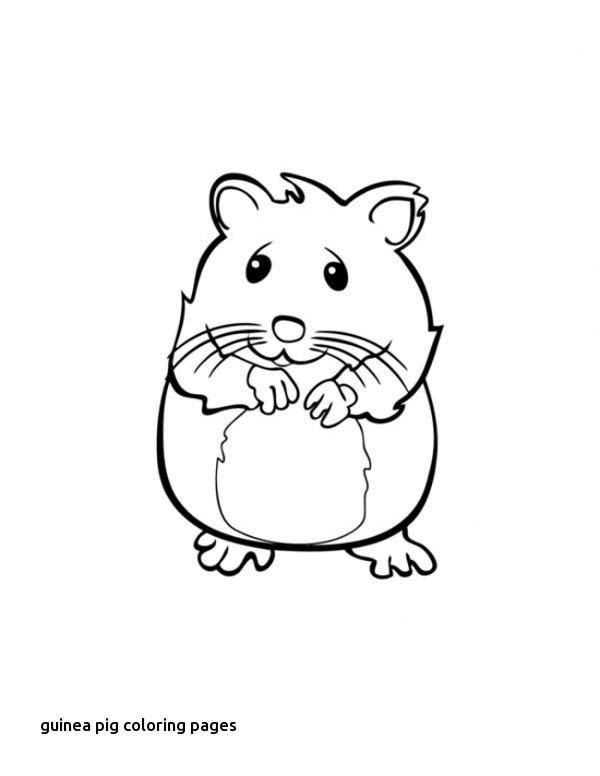 600x776 Guinea Pig Coloring Pages