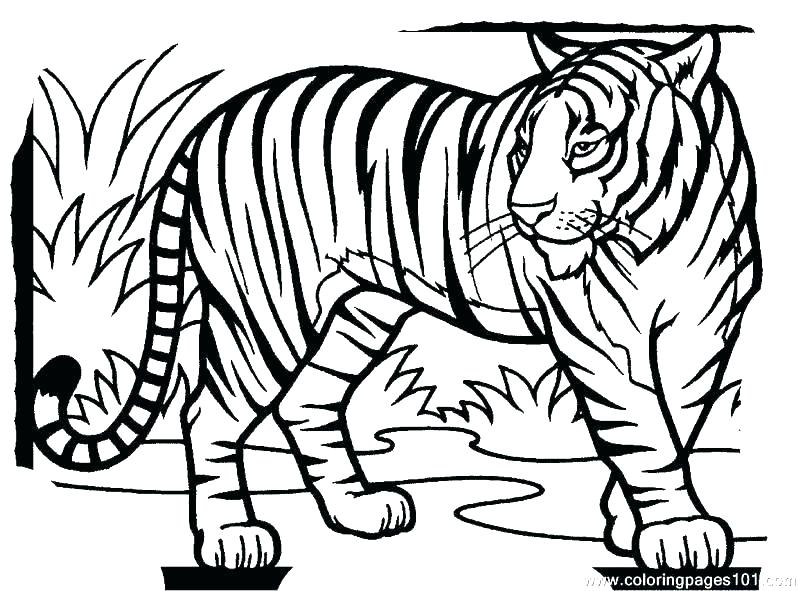 800x591 Coloring Pages Tiger Coloring Page Of A Tiger Printable Baby