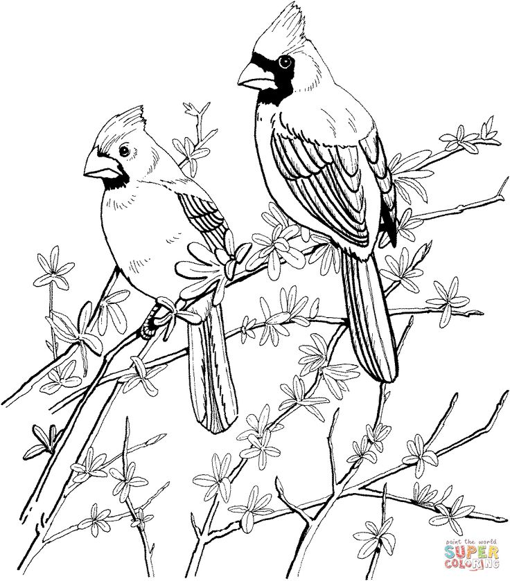Red Bird Coloring Page At Getdrawings Com Free For Personal Use