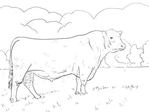 480x360 Bull Riding Coloring Pages Bull Riding Coloring Pages Free Bulldog