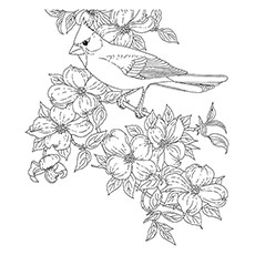 Red Cardinal Coloring Page