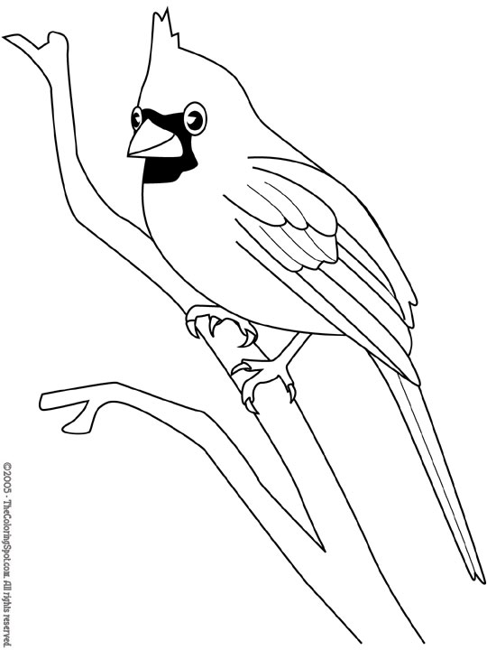 540x720 Cardinal Coloring Pages