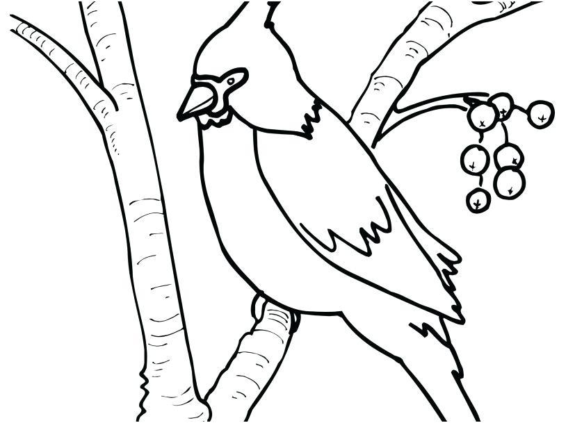 827x609 Cardinal Coloring Pages Cardinal Coloring Pages St Cardinal