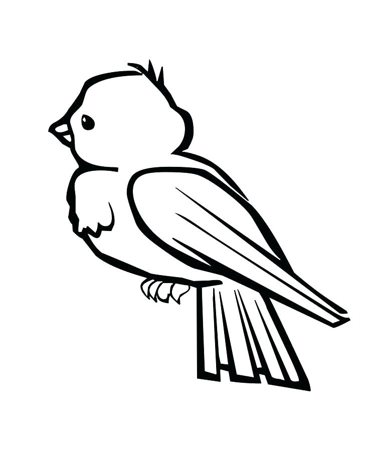 728x942 Cardinal Coloring Pages Google Image Result For Coloring Pages Red