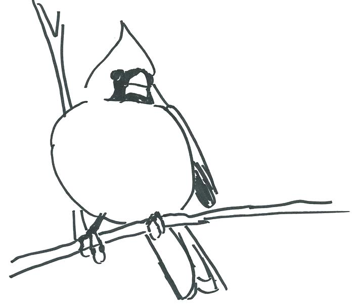 700x602 Cardinal Coloring Pages St Cardinal Coloring Pages Best Photos