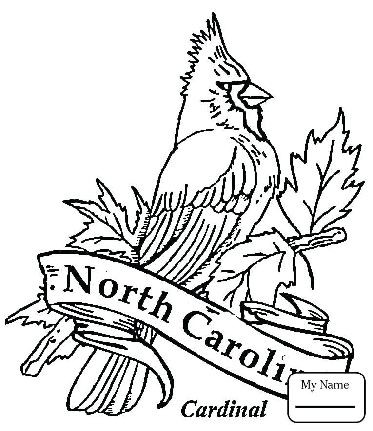 765x885 Cardinal Coloring Pages Winter Colouring Pages Coloring Page Free