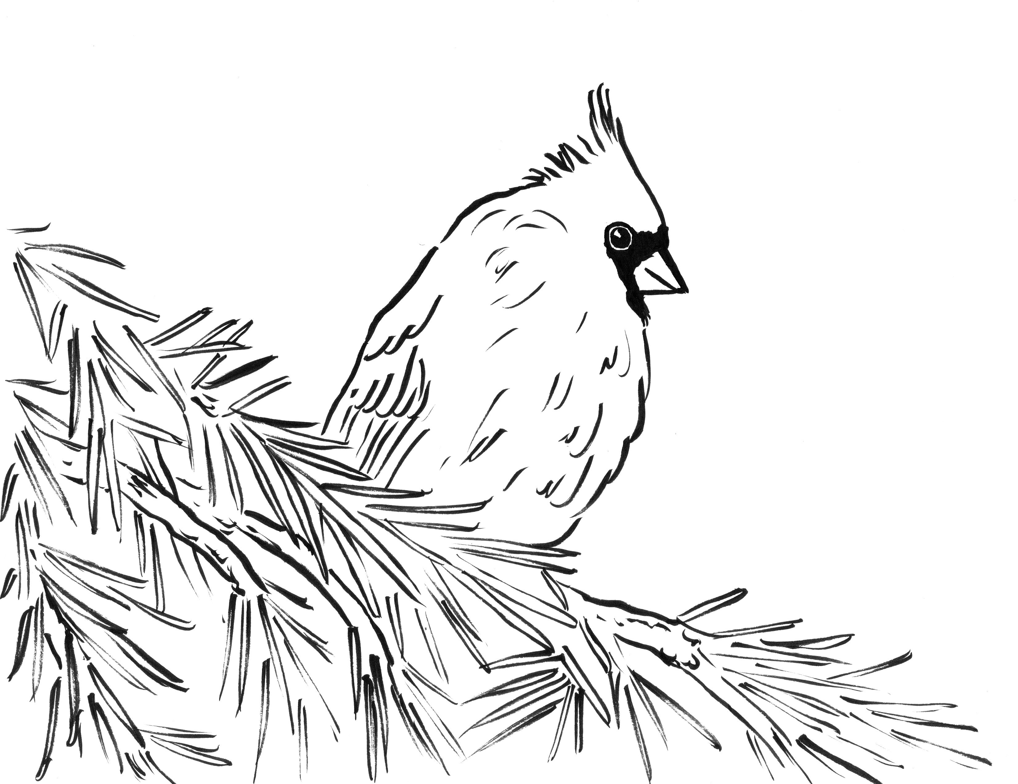 3303x2545 Northern Or Red Cardinal Coloring Page