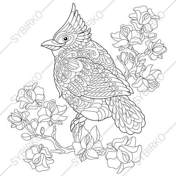 570x570 Red Cardinal Bird Coloring Page Animal Coloring Book Pages