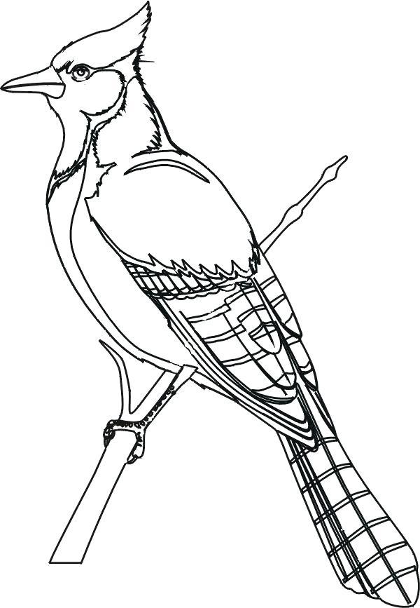 600x867 Cardinal Bird Coloring Page