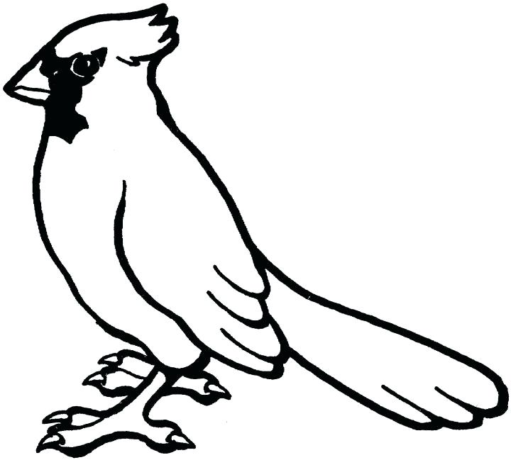 720x649 Cardinal Coloring Pages