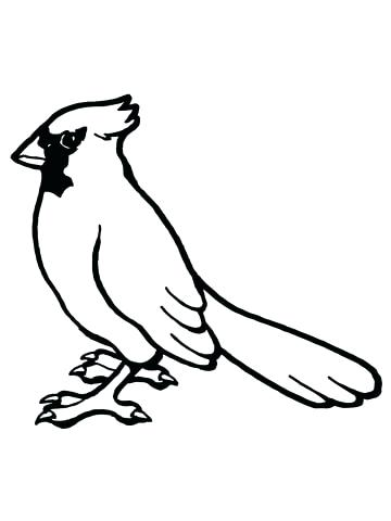 360x480 Cardinal Bird Coloring Page Cardinal Coloring Pages For Red