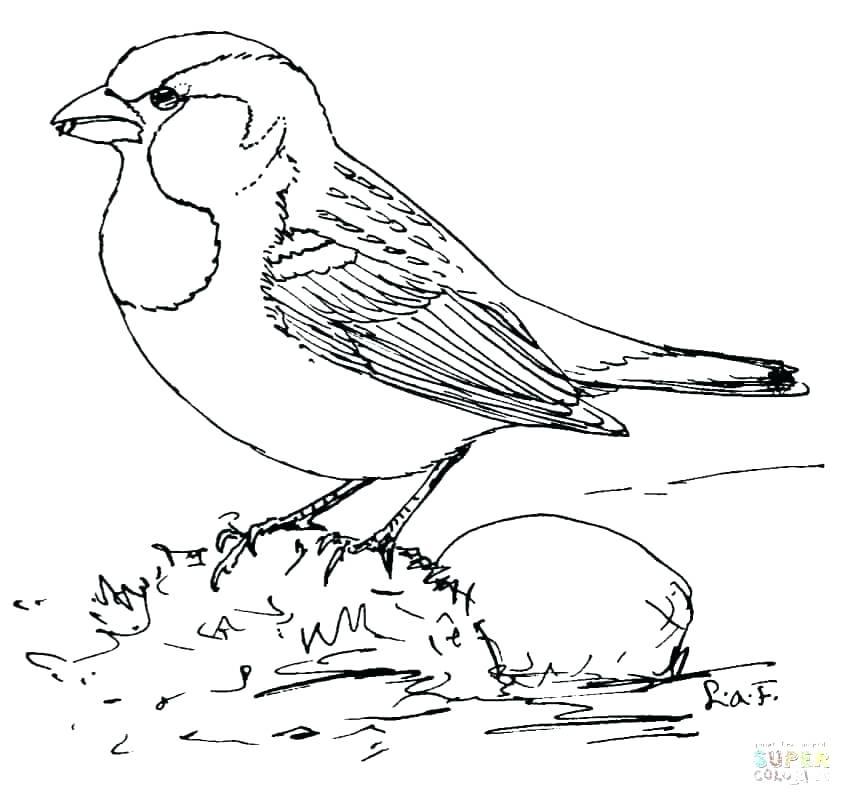 852x806 Cardinal Bird Coloring Page Cardinal Coloring Pages Sparrow