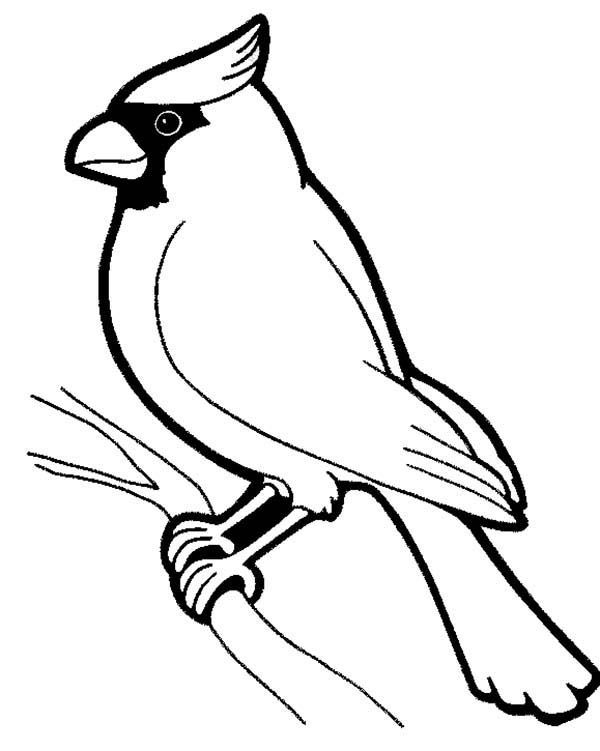 600x751 Cardinal Coloring Page Coloring Pages Cardinals