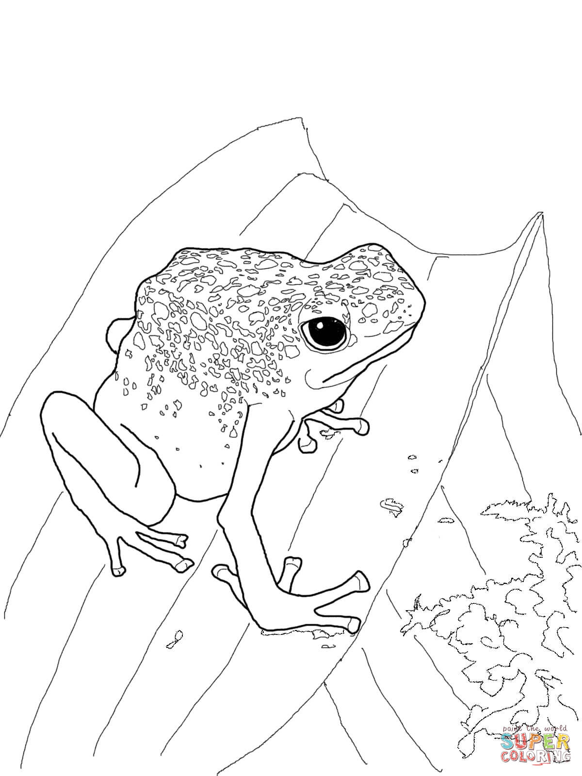 1200x1600 Blue Poison Dart Frog Coloring Page Free Printable Pages On Red