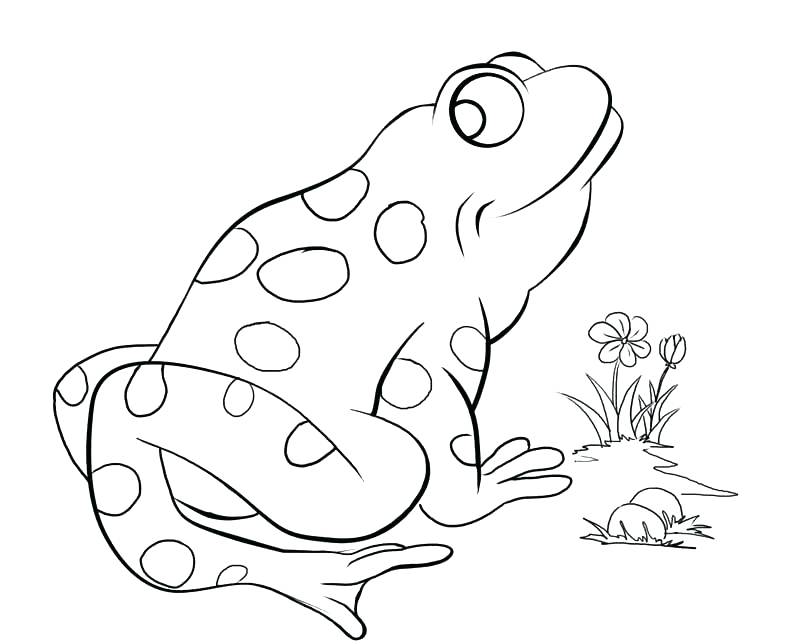 800x644 Red Eyed Tree Frog Coloring Page Coloring Page Realistic Frog Red