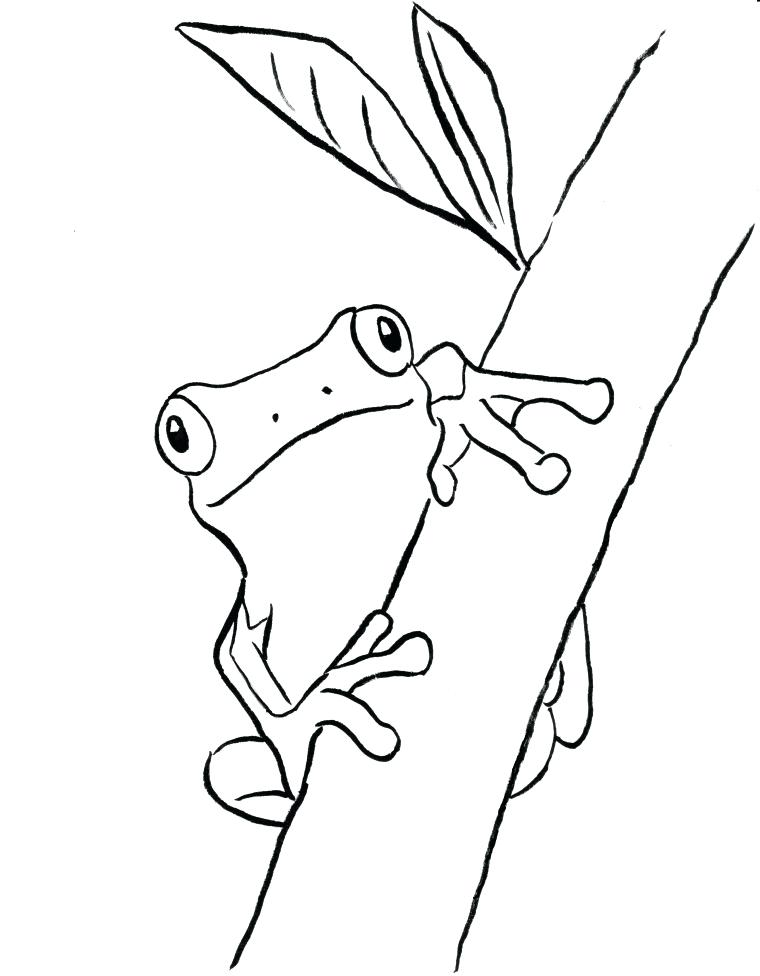 760x976 Red Eyed Tree Frog Coloring Page Red Eyed Tree Frog Outline