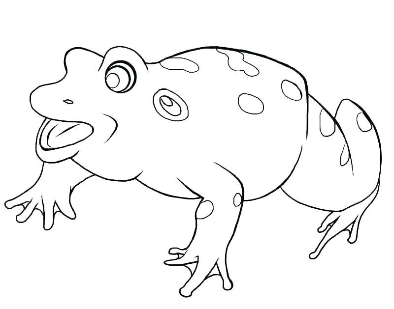 800x629 Coloring Pages Of Tree Frogs Green Tree Frog Coloring Page Free