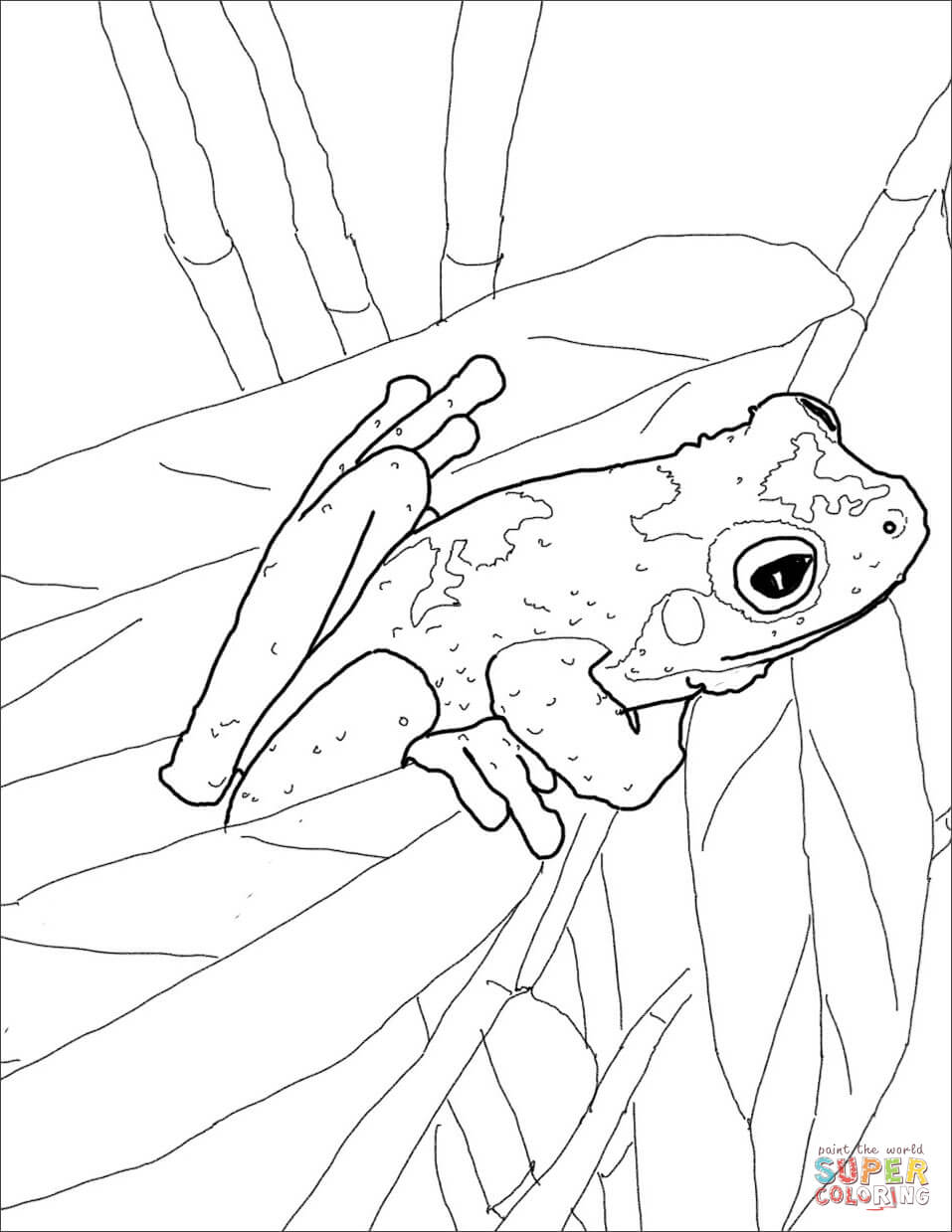 Red Eyed Tree Frog Coloring Page At Getdrawings Com Free For