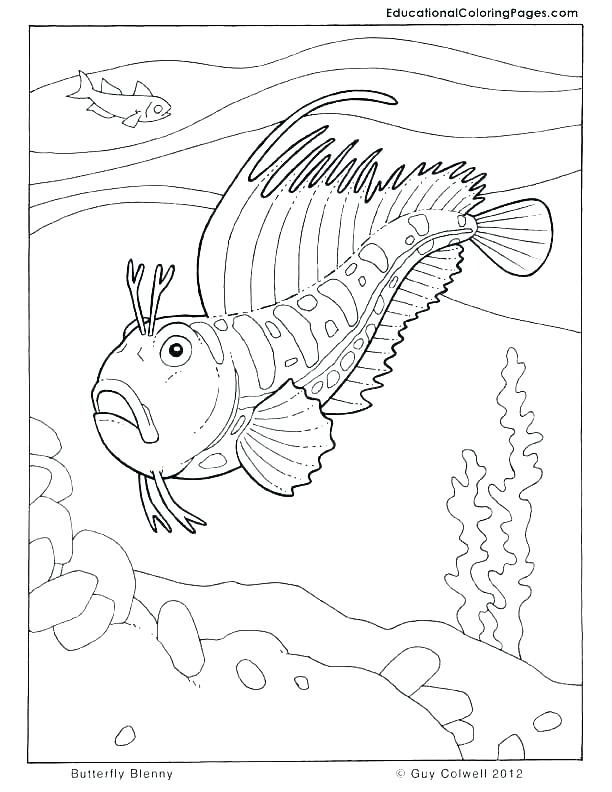 612x792 One Fish Two Fish Red Fish Blue Fish Coloring Page Coloring Pages