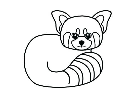 537x390 Giant Panda Coloring Page Red Panda Coloring Page Giant Panda