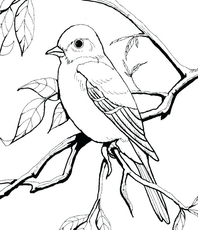 640x746 Robin Bird Coloring Pages Bird Coloring Books And Coloring Pages