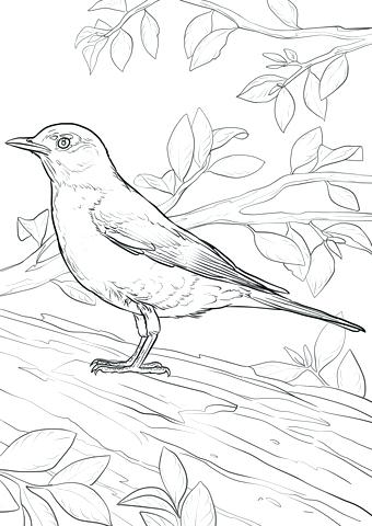 340x480 Robin Bird Coloring Pages Click To See Printable Version Of Robin
