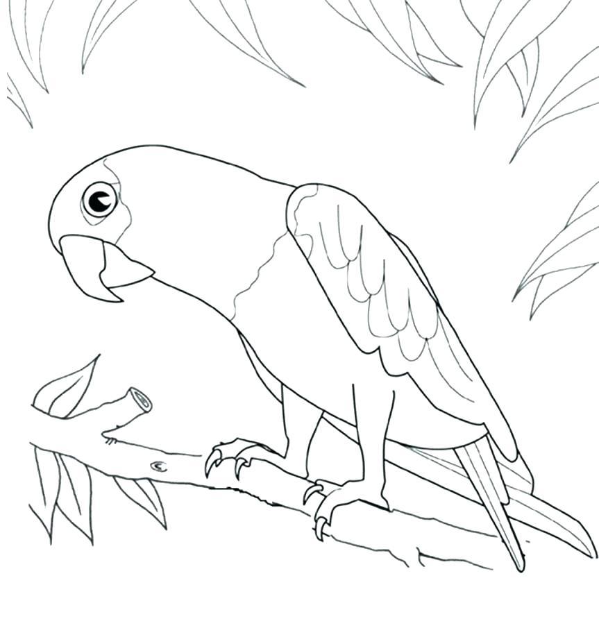 863x892 Robin Bird Coloring Pages Printable Bird Coloring Pages Printable