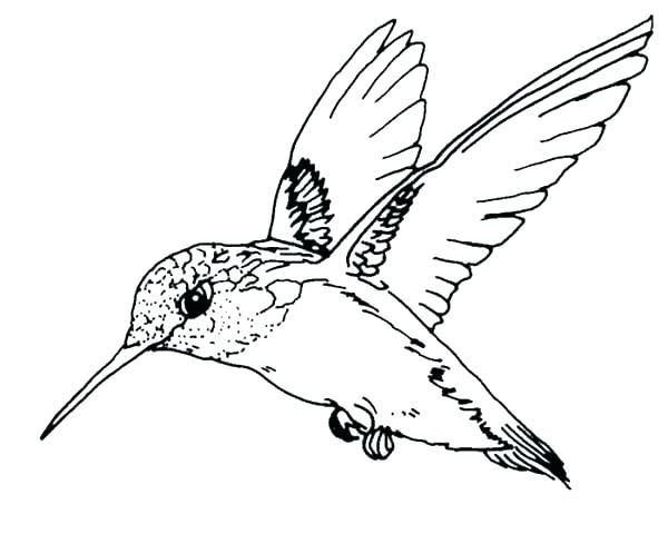 600x480 Robin Bird Coloring Pages Robin Bird Coloring Pages Coloring Pages
