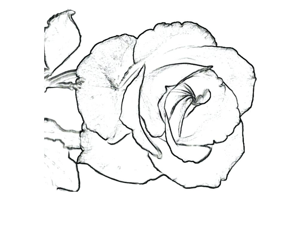 1024x768 Red Rose Flower Coloring Page Pic With I Love U Best Heart