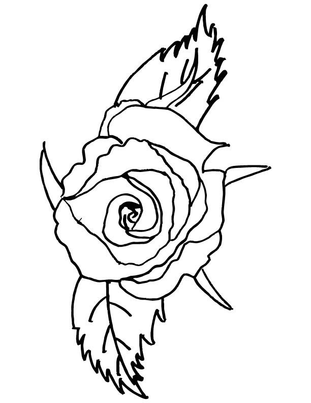 612x792 Red Rose Coloring Page Things To Color Free Printable