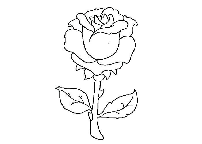 700x500 Rose Coloring Picture Rose Coloring Pages Coloring Pages Of Rose