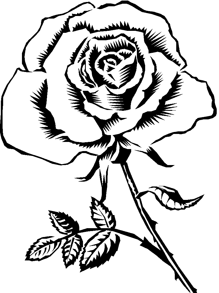 768x1026 Rose Flower Clip Art Coloring Pages