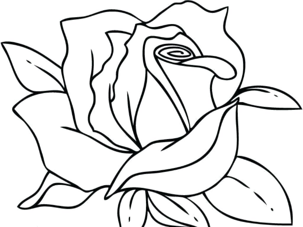 1024x768 Coloring Page Of A Rose Red Flower Trend Awesome Ideas Pages Five