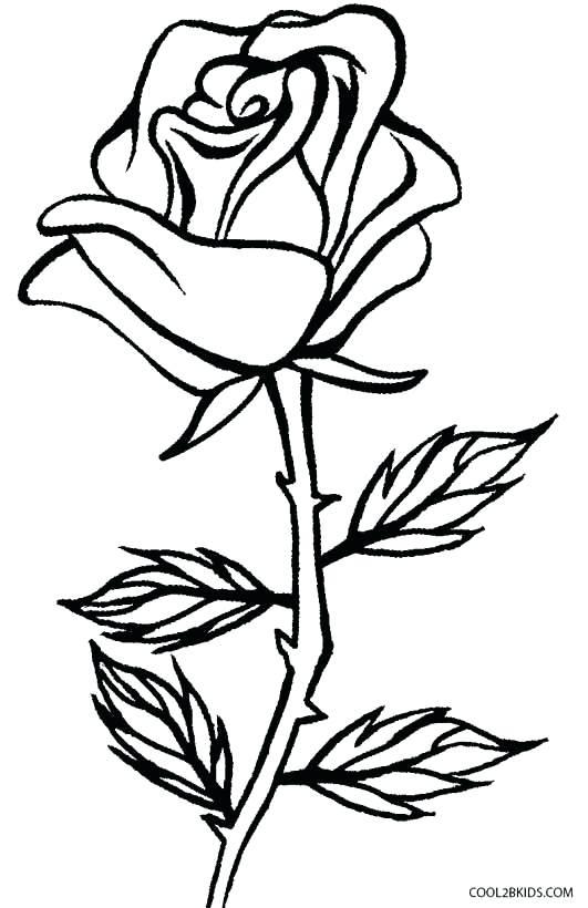 531x820 Roses Coloring Page Roses Coloring Pages Rose Coloring Books