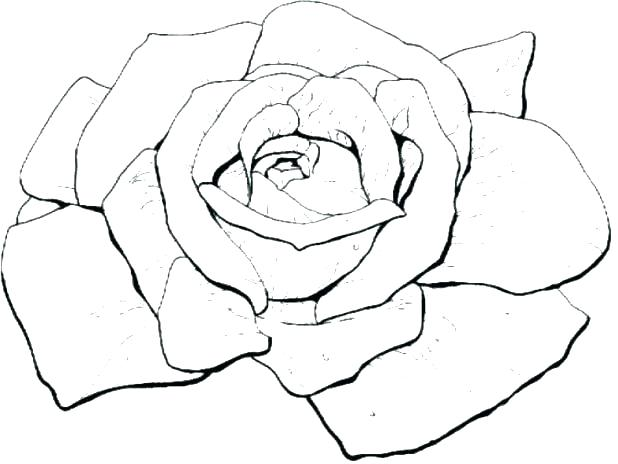 618x464 Coloring Pages Rose Beautiful Big Rose A Coloring Pages Rosetta