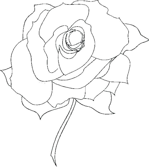 600x673 Coloring Pages Rose Roses Coloring Pages Printable Roses Coloring