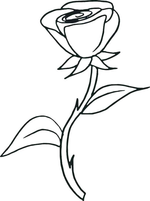 518x693 Coloring Pages Roses Coloring Pages Of Roses Rose Coloring Pages