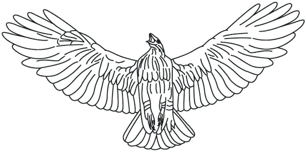1048x521 Red Tailed Hawk Coloring Page Hawk Coloring Pages Red Tailed Hawk