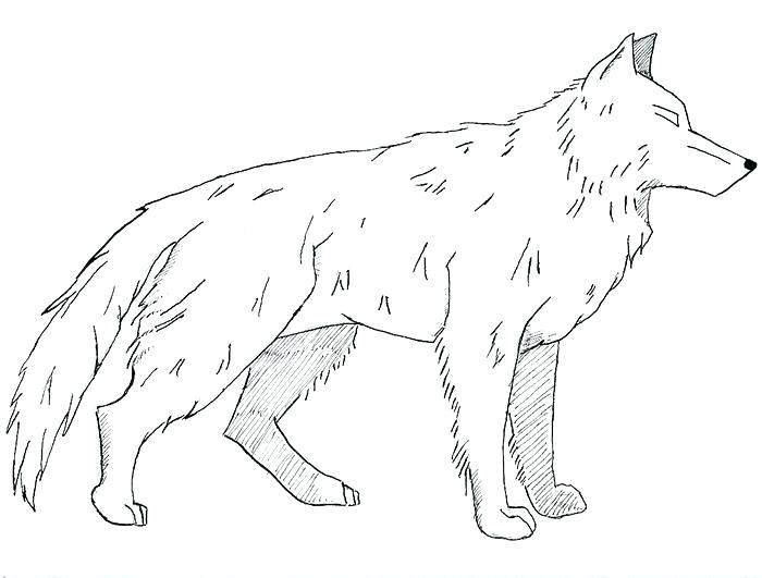 700x531 Realistic Wolf Coloring Pages Wolf Gray On Alert Mammals Coloring