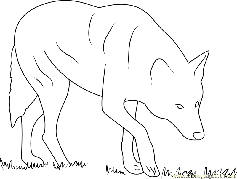 800x607 Red Wolf Albany Chehaw Printable Coloring Page For Kids And Adults