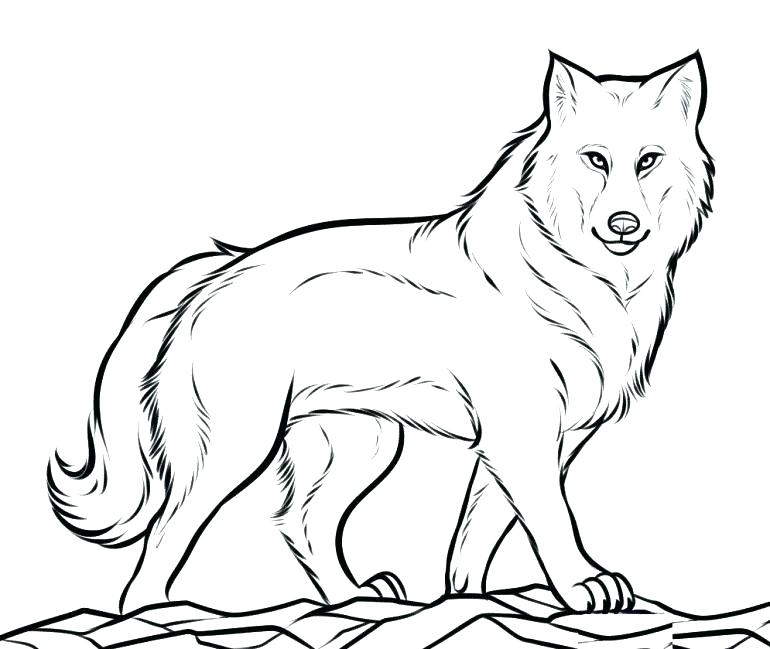 770x649 Wolf Pictures To Color Together With Coloring Pages Red Wolf