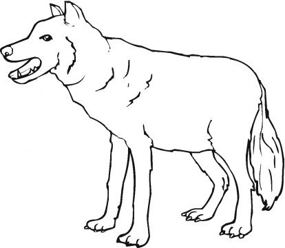 414x360 Red Wolf Coloring Pages Grade